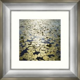 Lakeland Lilies II